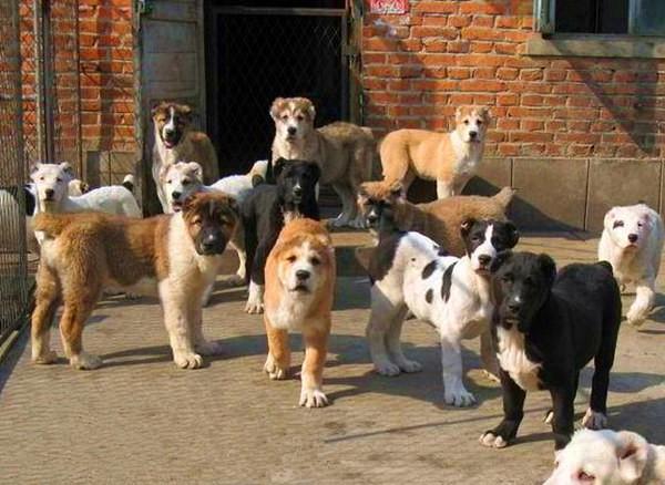 肉被打过疫苗的狗吃了还能吃吗养殖行请