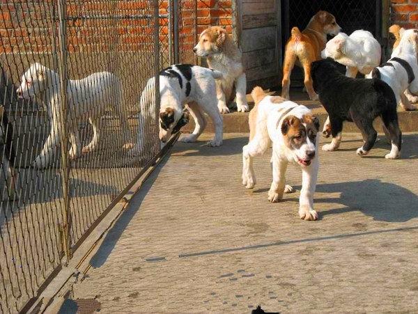 安徽肉狗肉狗规划肉狗养殖场市场前景分析