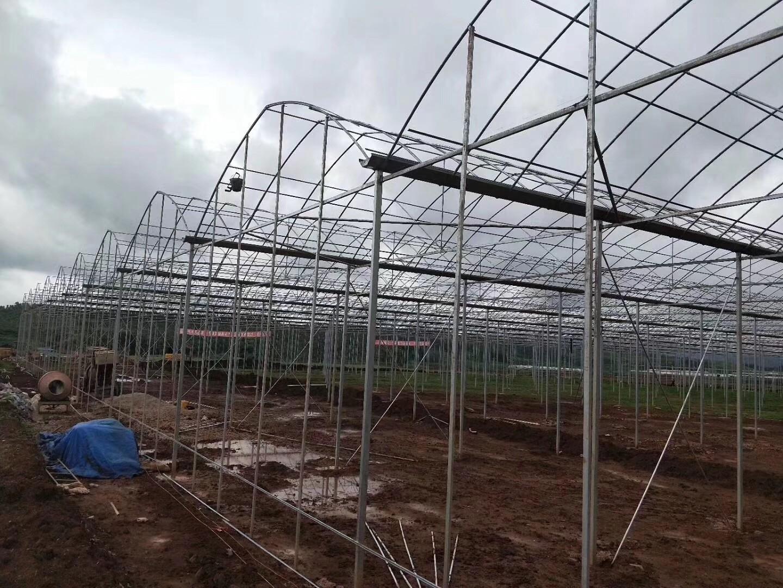湖南养殖大棚建造建造多少钱