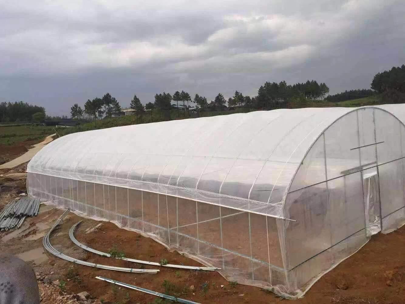 重庆单栋温室大棚厂家设计安装