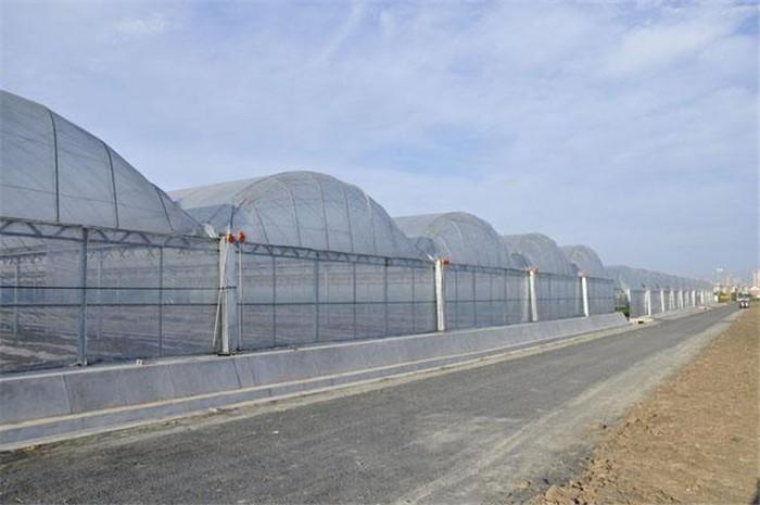 今日报道:黄圃镇日光温室江苏御地温室工程