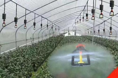 河南省许昌市魏都区枣树吊挂雾化式微喷调整喷头转速时