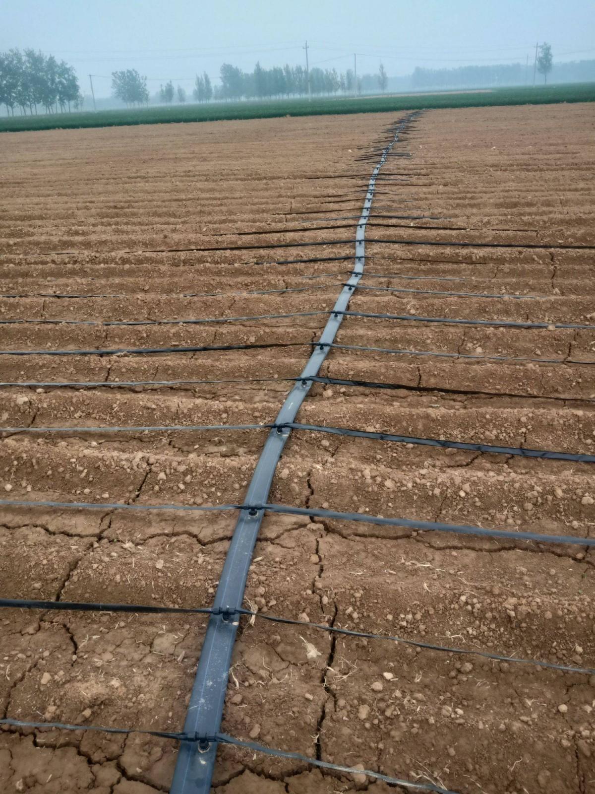 河南省周口市项城市山区蔬菜滴灌带钾1286mgkg