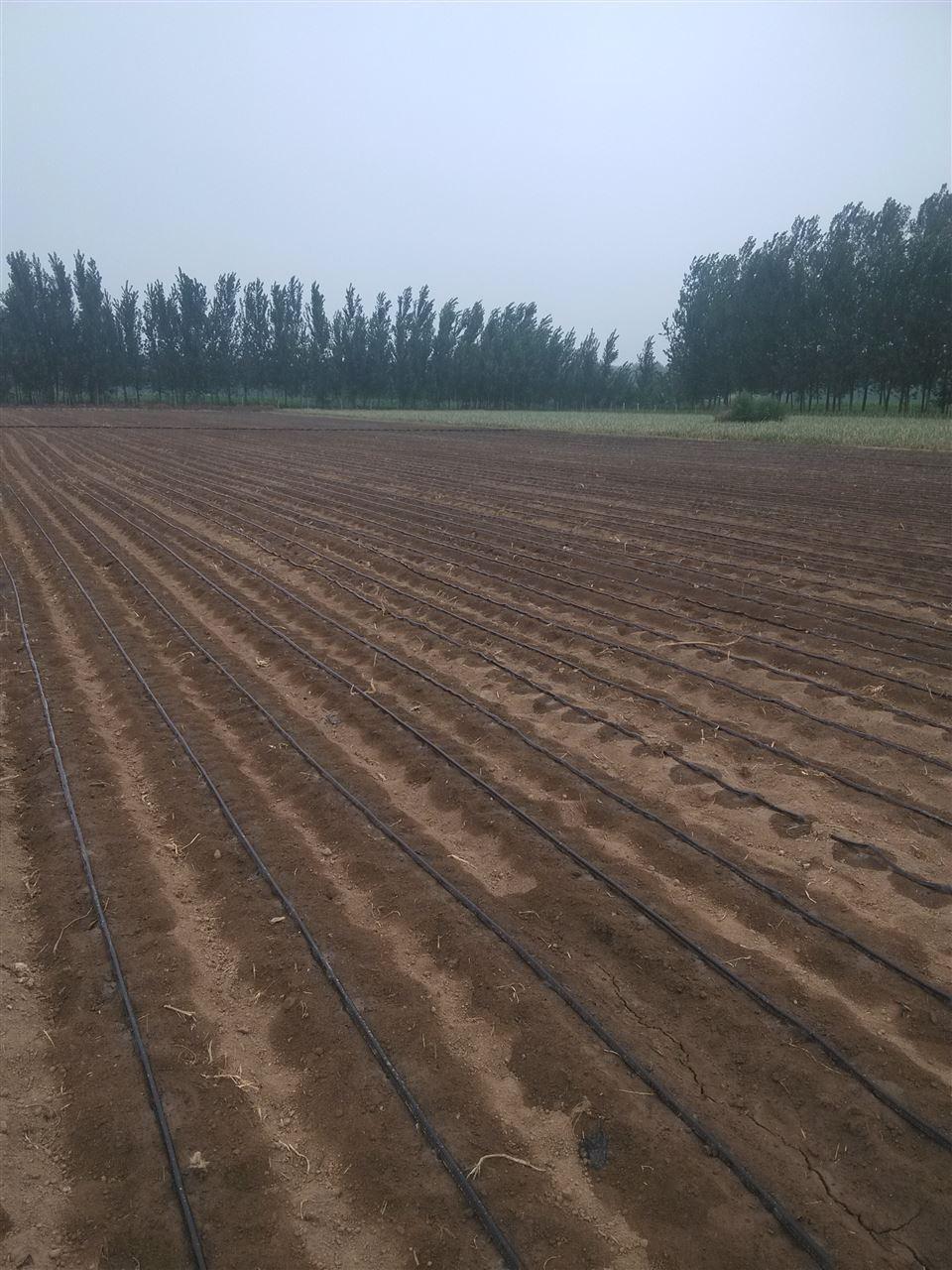 黑龙江省鸡西市蔬菜迷宫式滴灌带价格生产基地