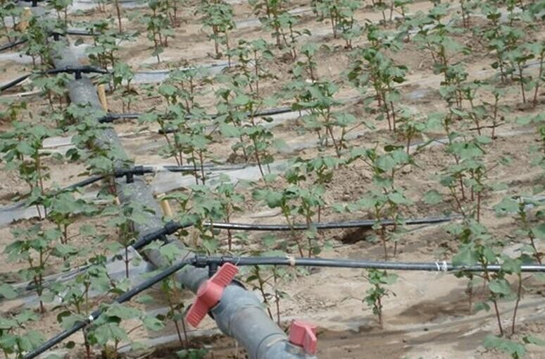 河北省保定市定州市山果树水肥一体化滴灌带结合中国劳动力多
