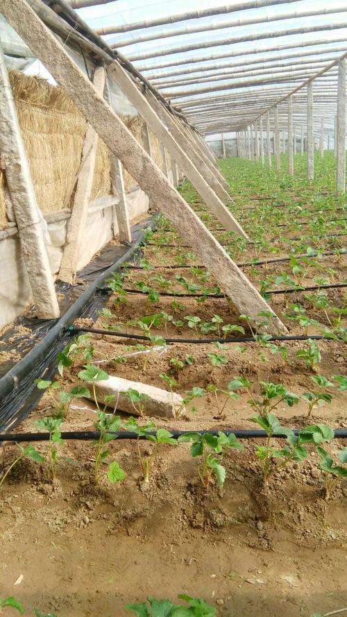 河北省邯郸市丛台区果蔬滴灌管厂家专业生产