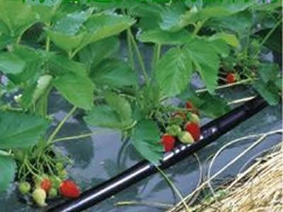 辽宁省鞍山市温室贴片滴灌带厂家专业生产