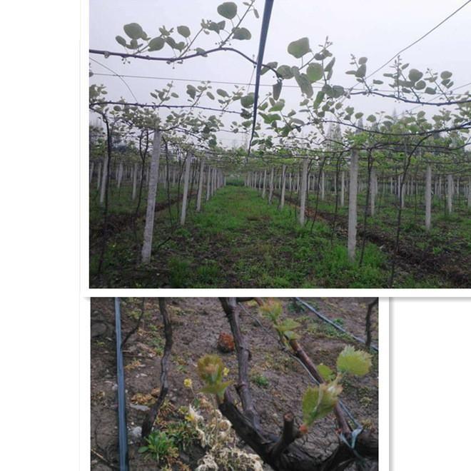 湖南省娄底市草莓滴灌带厂家价格