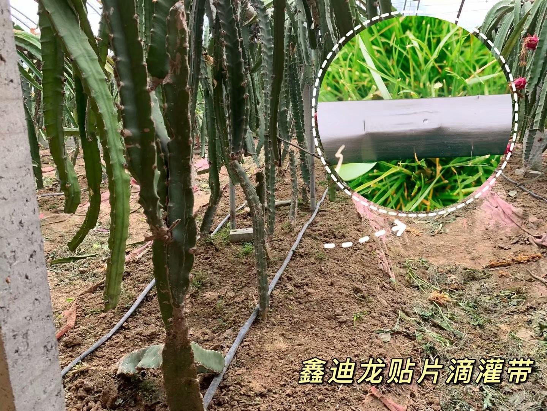 辽宁省鞍山市山果树滴灌带厂家专业生产