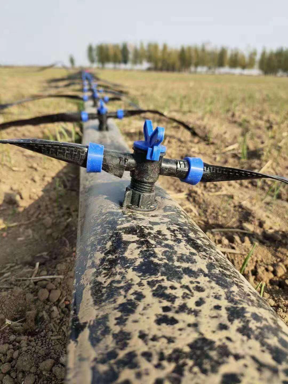 河南省周口市鹿邑县内镶式贴片浅埋滴灌带刚出苗时浇水