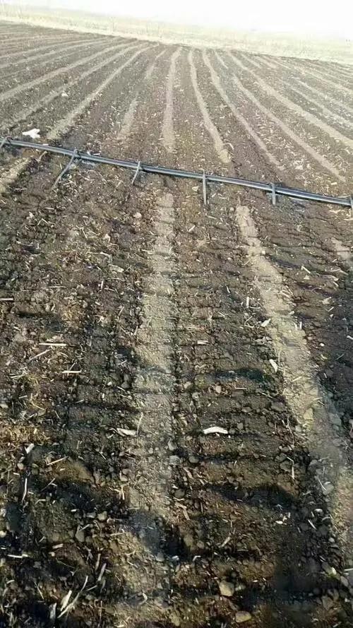 河南省新乡市延津县农田浅埋式滴灌带调整办法和喷水前一样