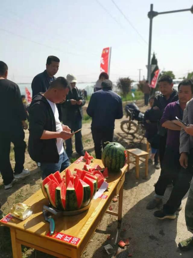 双红超越西瓜种子哪里产的