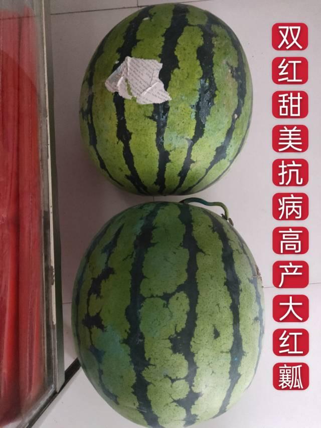 双红金钻西瓜种子全国畅销