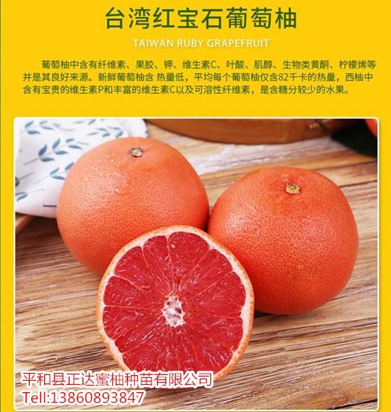 台湾红宝石葡萄柚苗批发长河源