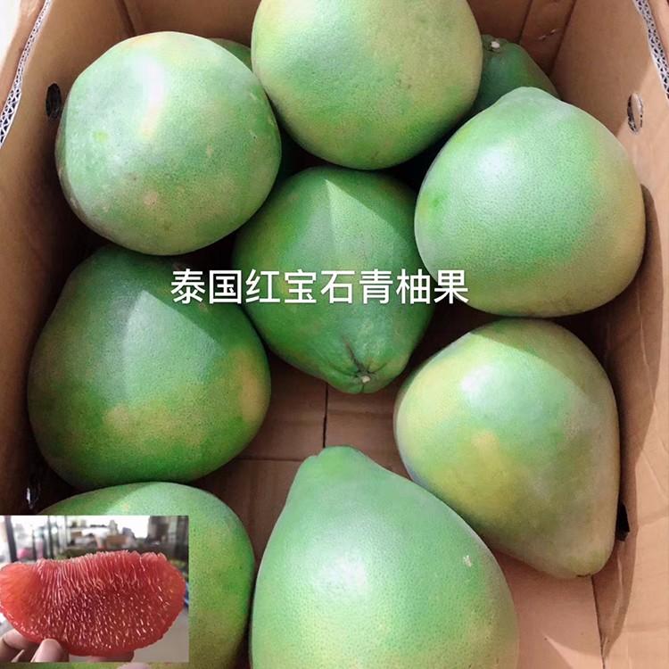 项城泰国红宝石青柚大苗市场价格行情如何