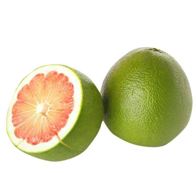 泰国青皮蜜柚苗-福建平和县正达蜜柚种苗有限公司通渭