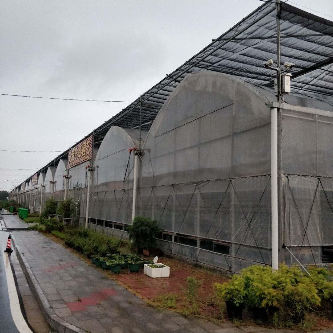 江山8430连体大棚正规厂家